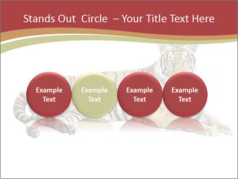 Tiger PowerPoint Template - Slide 76