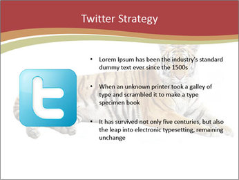 Tiger PowerPoint Template - Slide 9
