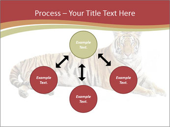 Tiger PowerPoint Template - Slide 91
