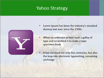 Male Caribou Grazing PowerPoint Templates - Slide 11