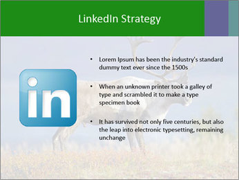 Male Caribou Grazing PowerPoint Templates - Slide 12