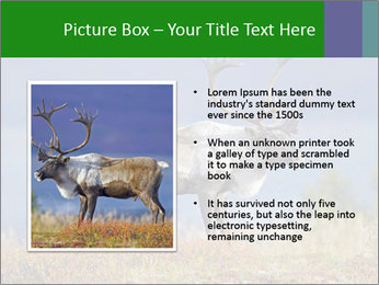 Male Caribou Grazing PowerPoint Templates - Slide 13