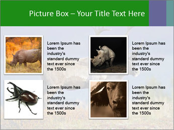 Male Caribou Grazing PowerPoint Templates - Slide 14