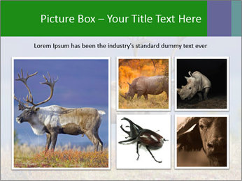Male Caribou Grazing PowerPoint Templates - Slide 19