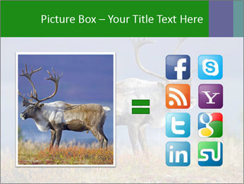Male Caribou Grazing PowerPoint Templates - Slide 21