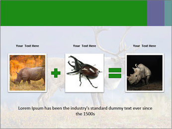 Male Caribou Grazing PowerPoint Templates - Slide 22