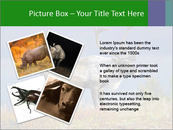 Male Caribou Grazing PowerPoint Templates - Slide 23