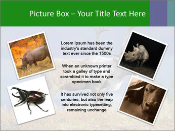 Male Caribou Grazing PowerPoint Templates - Slide 24