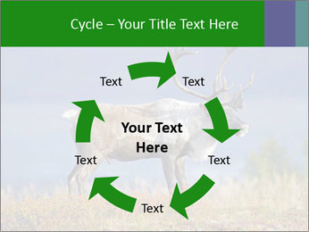Male Caribou Grazing PowerPoint Templates - Slide 62