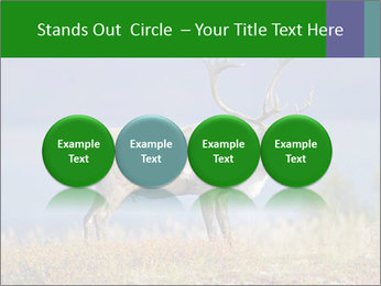 Male Caribou Grazing PowerPoint Templates - Slide 76