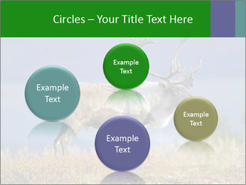 Male Caribou Grazing PowerPoint Templates - Slide 77