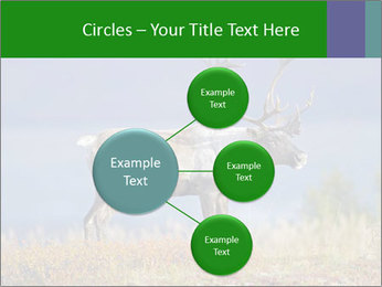Male Caribou Grazing PowerPoint Templates - Slide 79