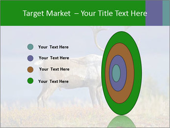 Male Caribou Grazing PowerPoint Templates - Slide 84