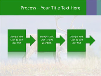 Male Caribou Grazing PowerPoint Templates - Slide 88