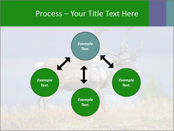 Male Caribou Grazing PowerPoint Templates - Slide 91