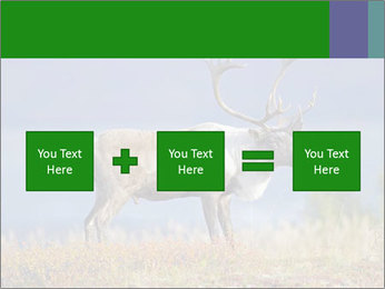 Male Caribou Grazing PowerPoint Templates - Slide 95