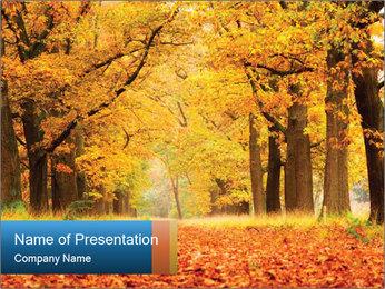 Beautiful autumn forest PowerPoint Template - Slide 1