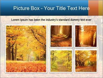 Beautiful autumn forest PowerPoint Template - Slide 19