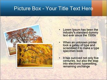 Beautiful autumn forest PowerPoint Template - Slide 20