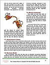 0000093947 Word Templates - Page 4