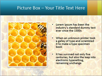 Working bees on honey cells PowerPoint Templates - Slide 13