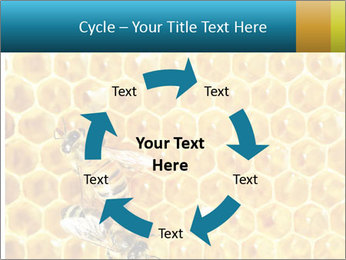 Working bees on honey cells PowerPoint Template - Slide 62