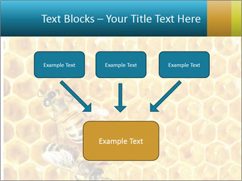 Working bees on honey cells PowerPoint Templates - Slide 70