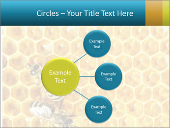Working bees on honey cells PowerPoint Templates - Slide 79