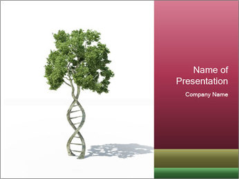 DNA shaped tree with trunks PowerPoint Template - Slide 1