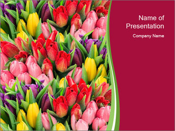 Bouquet of multicolor tulips PowerPoint Template - Slide 1