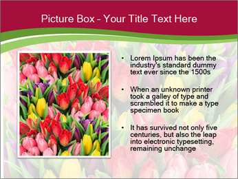 Bouquet of multicolor tulips PowerPoint Template - Slide 13