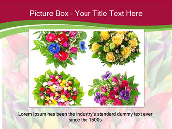 Bouquet of multicolor tulips PowerPoint Template - Slide 15
