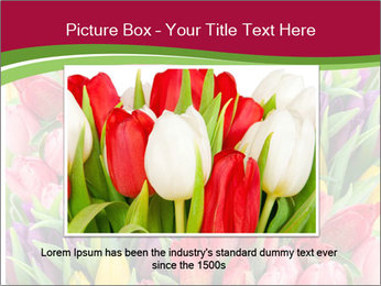 Bouquet of multicolor tulips PowerPoint Template - Slide 16