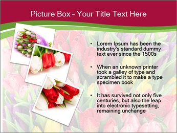 Bouquet of multicolor tulips PowerPoint Template - Slide 17