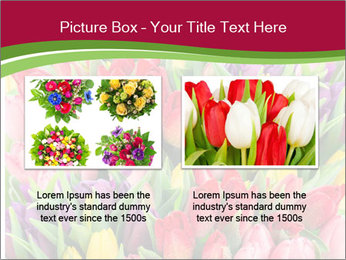 Bouquet of multicolor tulips PowerPoint Template - Slide 18