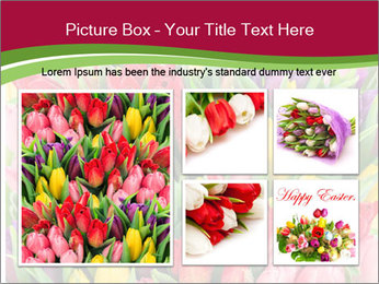 Bouquet of multicolor tulips PowerPoint Template - Slide 19