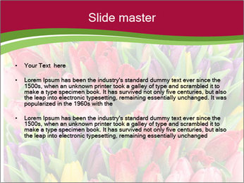 Bouquet of multicolor tulips PowerPoint Template - Slide 2