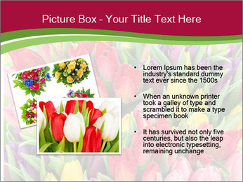 Bouquet of multicolor tulips PowerPoint Template - Slide 20