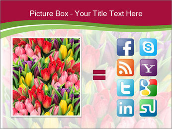 Bouquet of multicolor tulips PowerPoint Template - Slide 21