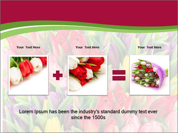 Bouquet of multicolor tulips PowerPoint Template - Slide 22