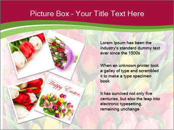 Bouquet of multicolor tulips PowerPoint Template - Slide 23