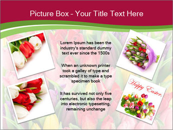Bouquet of multicolor tulips PowerPoint Template - Slide 24