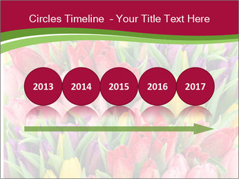 Bouquet of multicolor tulips PowerPoint Template - Slide 29