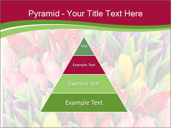 Bouquet of multicolor tulips PowerPoint Template - Slide 30