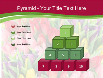 Bouquet of multicolor tulips PowerPoint Template - Slide 31