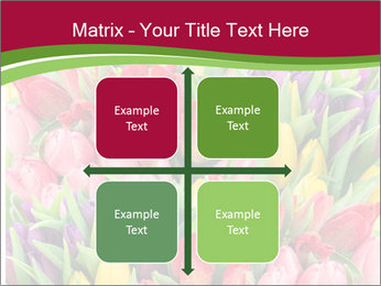 Bouquet of multicolor tulips PowerPoint Template - Slide 37