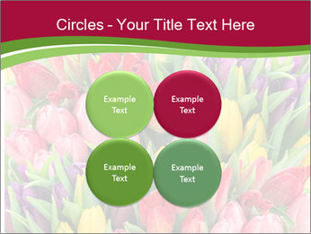 Bouquet of multicolor tulips PowerPoint Template - Slide 38