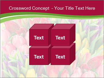 Bouquet of multicolor tulips PowerPoint Template - Slide 39
