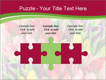 Bouquet of multicolor tulips PowerPoint Template - Slide 42