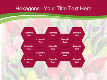 Bouquet of multicolor tulips PowerPoint Template - Slide 44